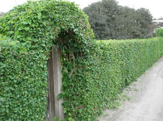забор (2)