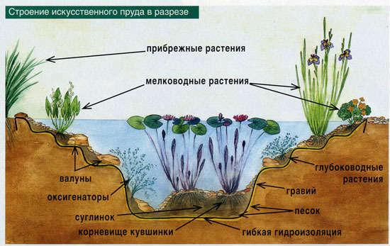 фото к растениям