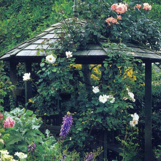 Garden22-520x520