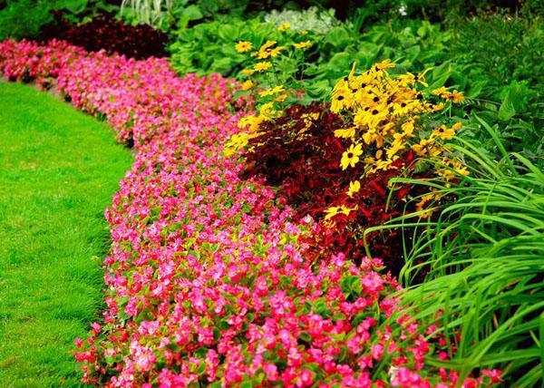 цветами (3)