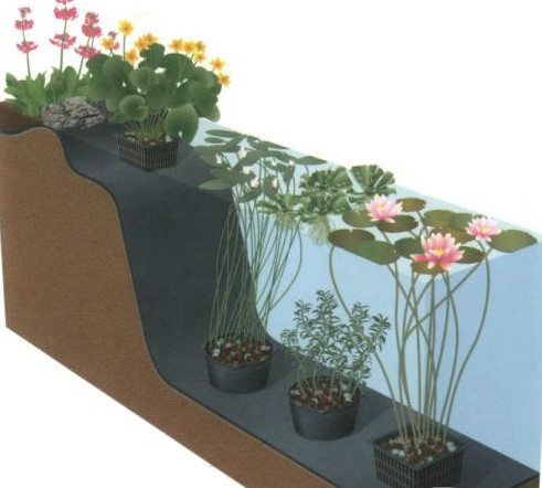 5585044-zahradni-jezirka-specializovany-e-shop--11