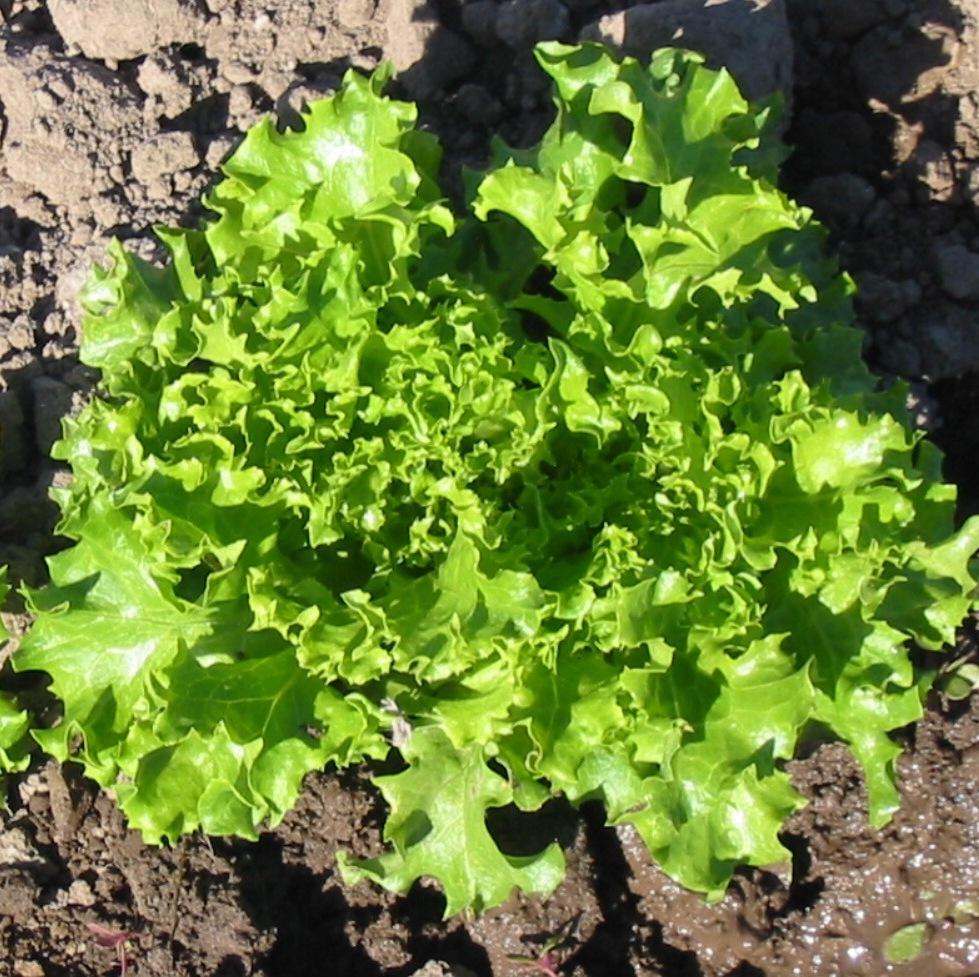 снежинка салат